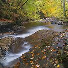 Beauty at the Moness Burn, Aberfeldy, Scotland by Cliff Williams