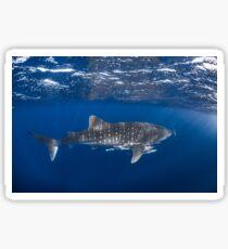 Whale Shark 9828 Sticker