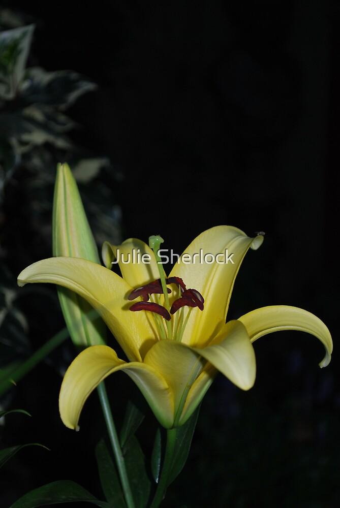 Lilium sp. by Julie Sherlock