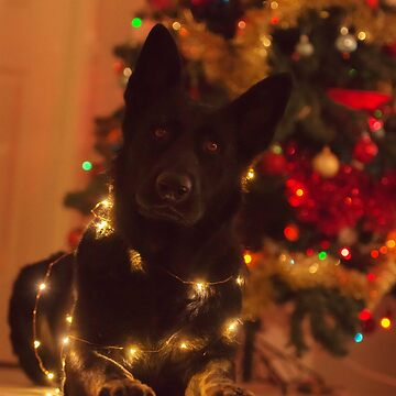 German Shepherd Christmas  by kezzamccwill