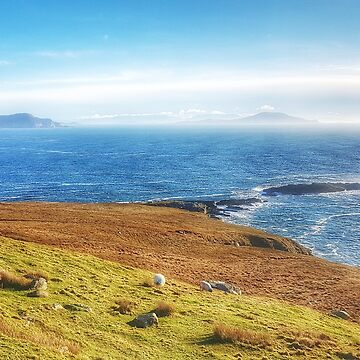 Sheep grazing with Clew Bay in the distance by paulmcnam