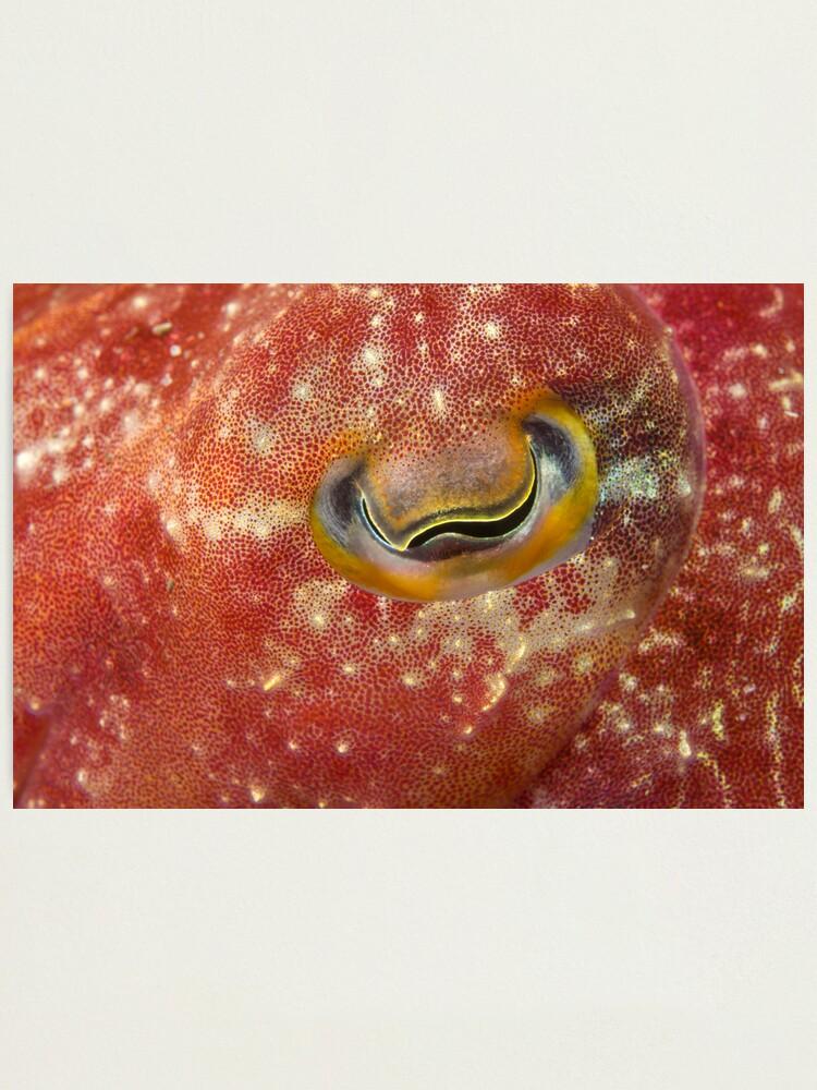 Alternate view of Reaper Cuttlefish Eye Photographic Print