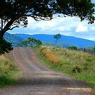 The Road in My Dreams by Bev Woodman