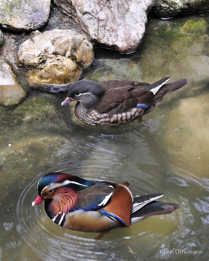 Ducks  by Klaus Offermann