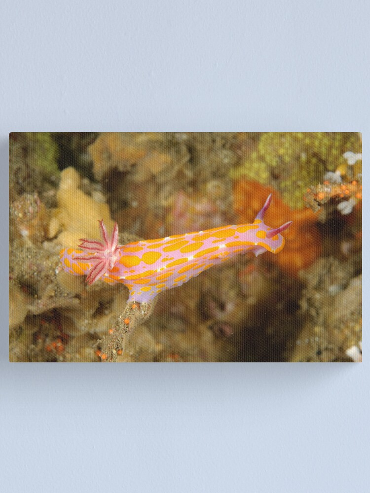 Alternate view of Nudibranch - Ceratosoma amoena Canvas Print