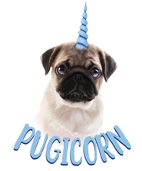 cute pug pictures