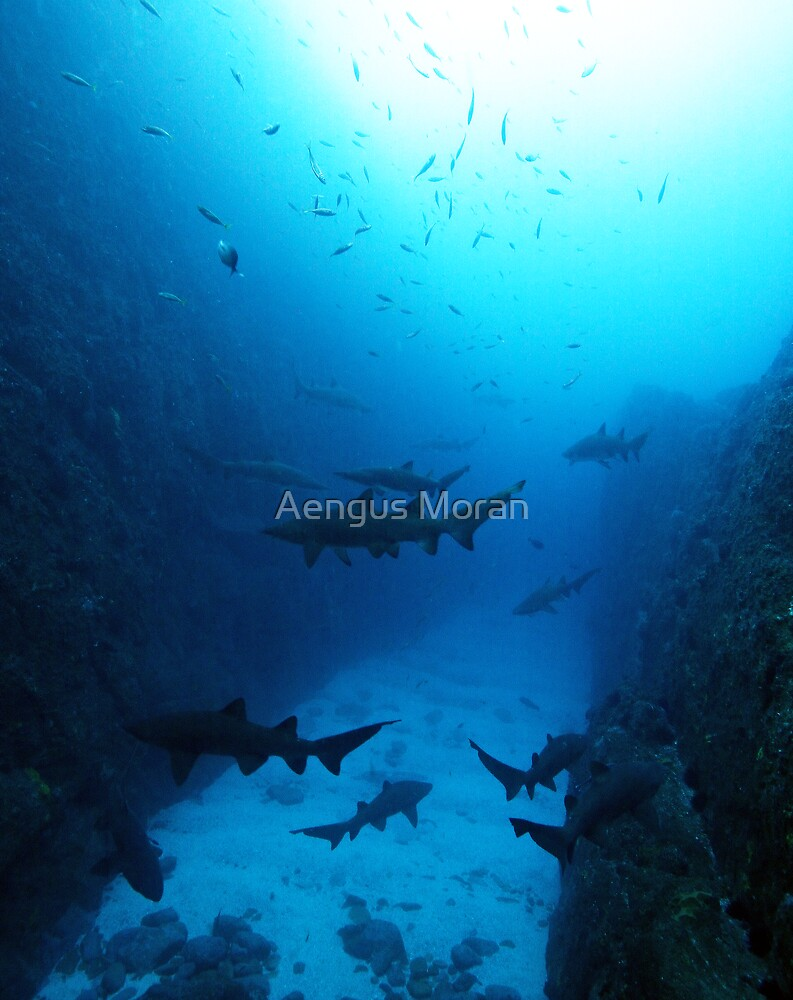 Shark Country by Aengus Moran