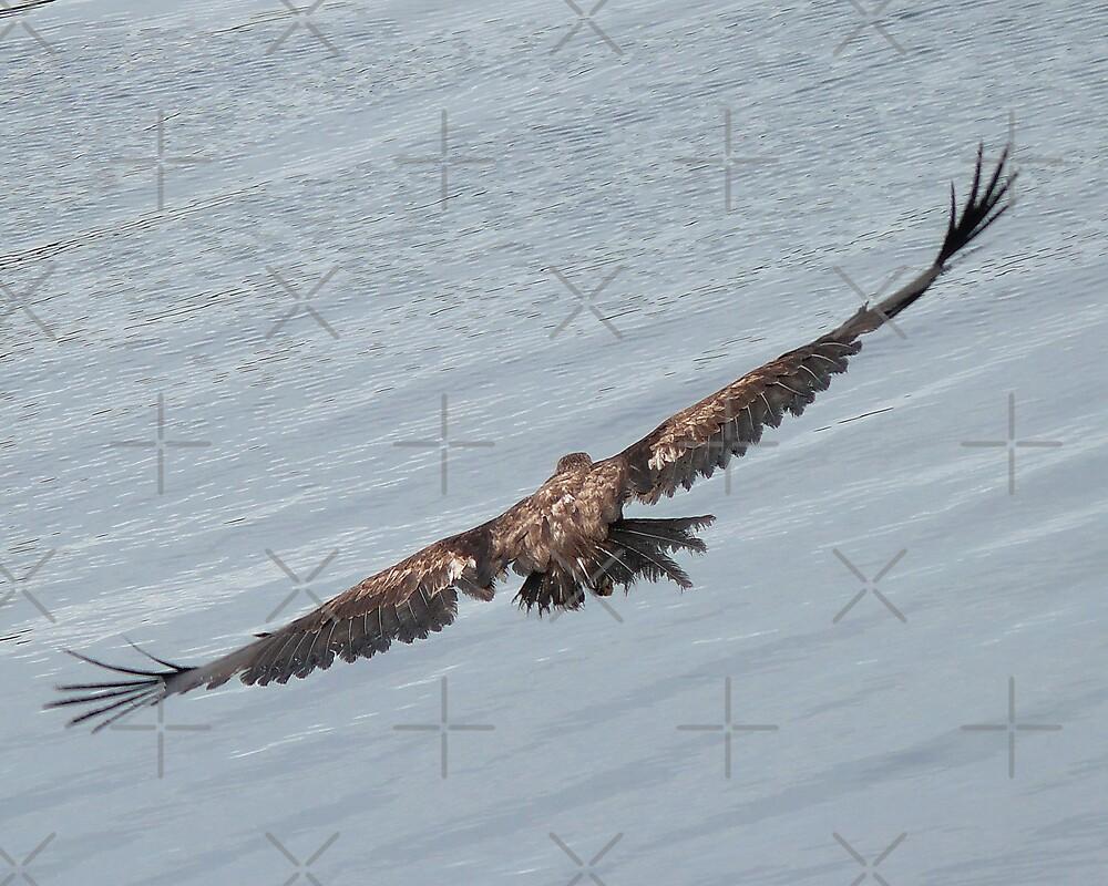 Wing Span by Gail Bridger