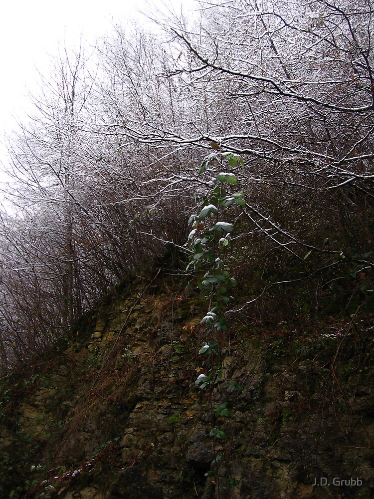 A Delicate Balance of Winter, Riedlingen, Germany 2008 by J.D. Grubb