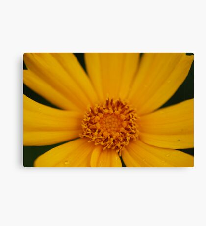 Blooming nature Canvas Print
