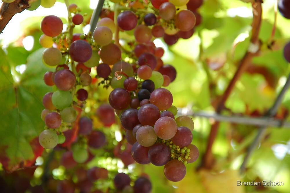 Grapes by Brendan Schoon