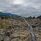 Nisga'a Memorial Lava Bed Park, Reaching Tree by Brendan Schoon