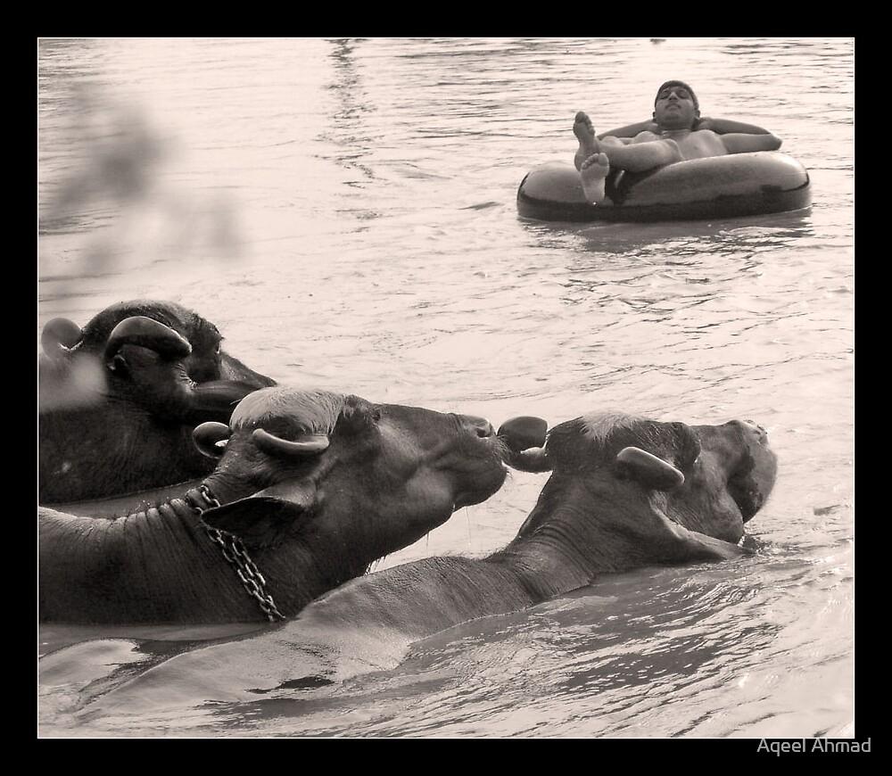 Peaceful coexistence by Aqeel Ahmad