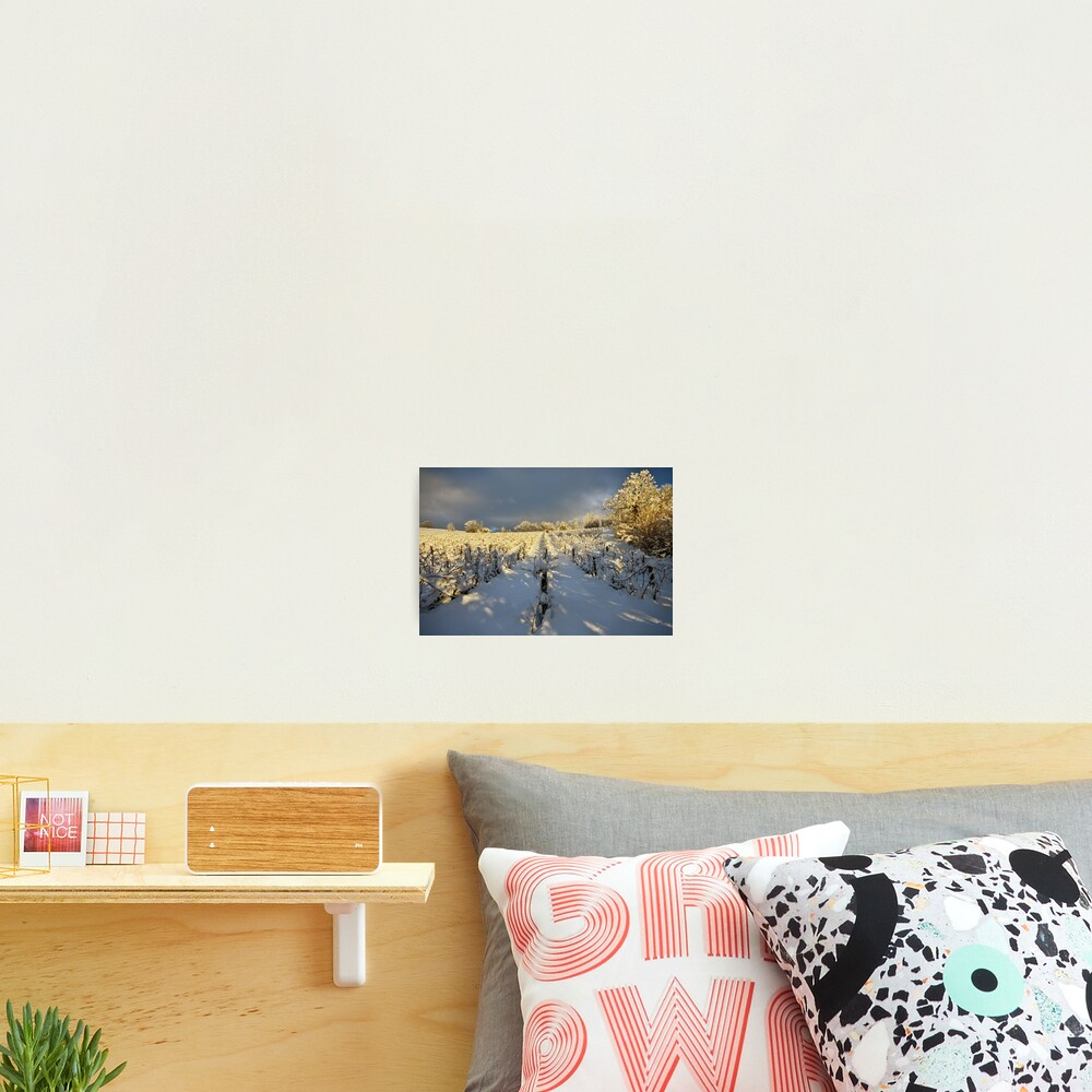 Snow and sun on the french vineyard Photographic Print