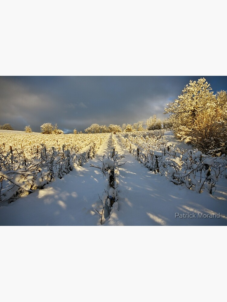 Snow and sun on the french vineyard by patmo