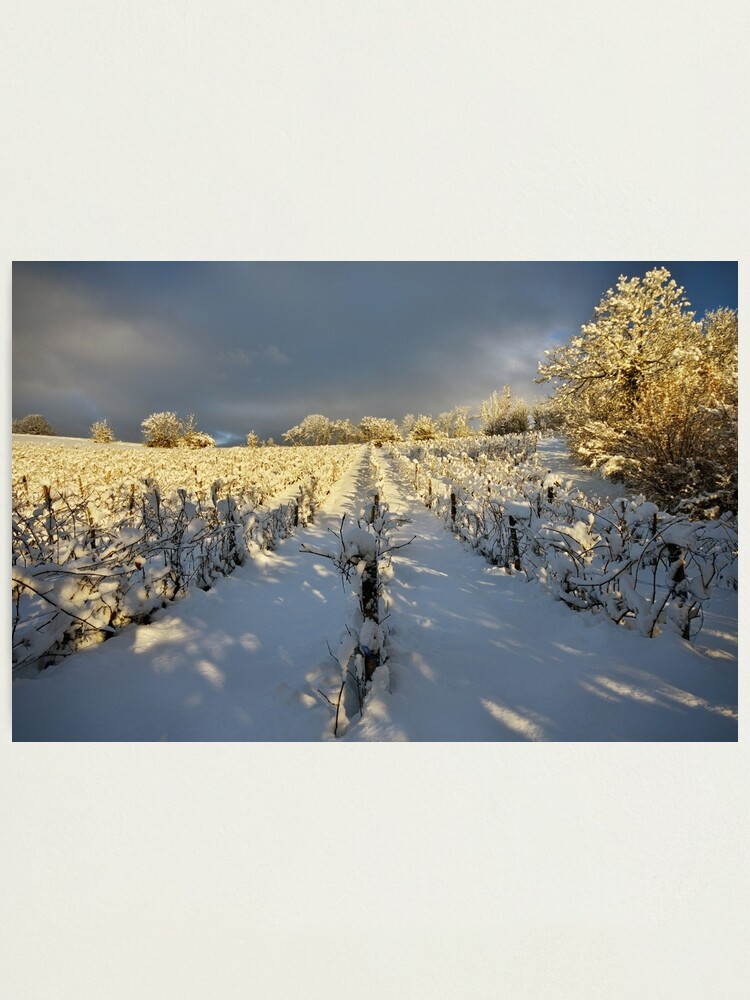 Alternate view of Snow and sun on the french vineyard Photographic Print