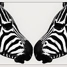 Zebra Love by Yvon van der Wijk