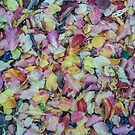 fall mosaic 3 by Bruce  Dickson