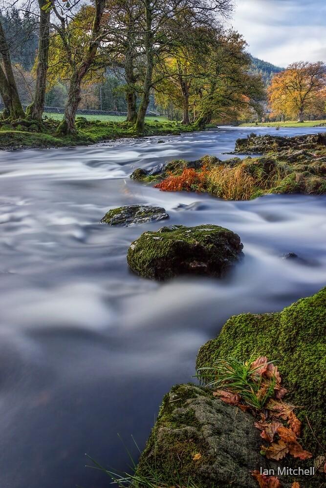 Fall Dreams by Ian Mitchell