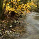 Autumn tree along the stream by Patrick Morand
