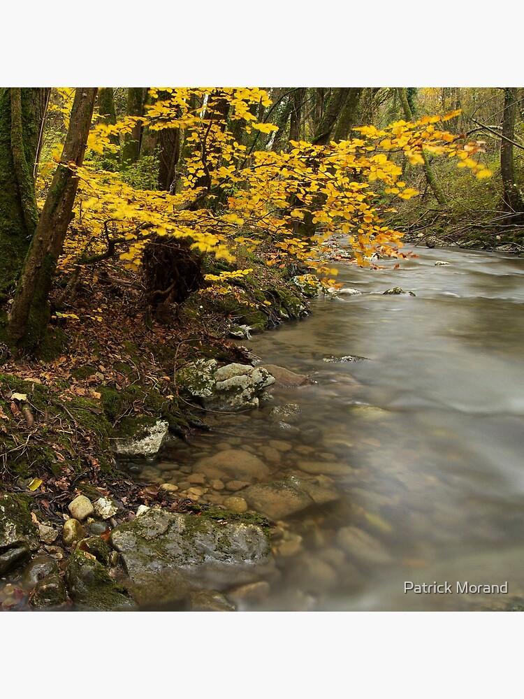 Autumn tree along the stream by patmo