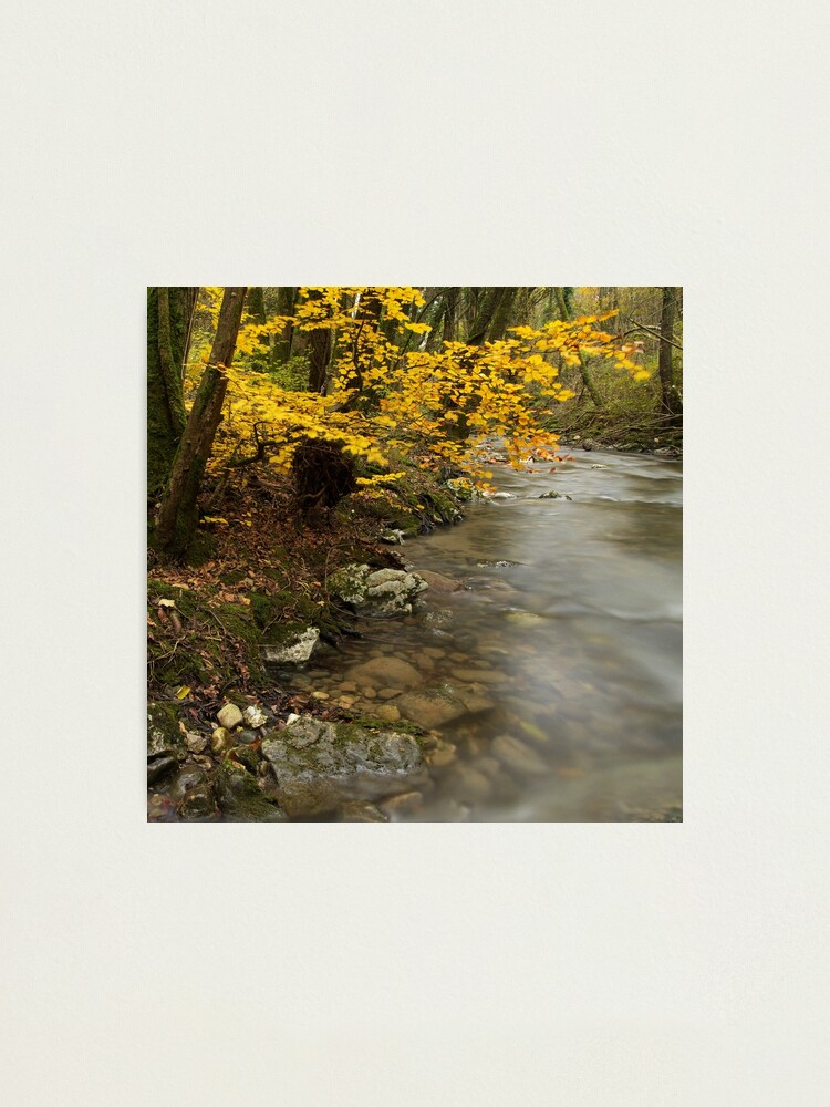 Alternate view of Autumn tree along the stream Photographic Print