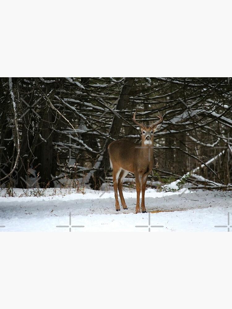 Buck in winter by debfaraday