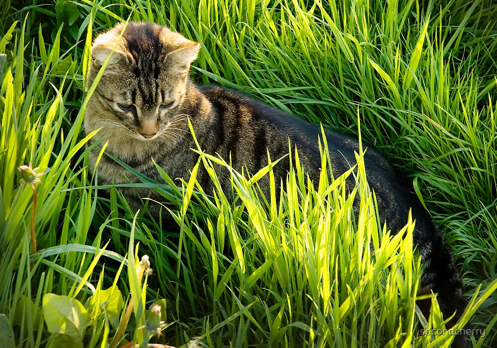 Rockwell in the Grass by secondcherry