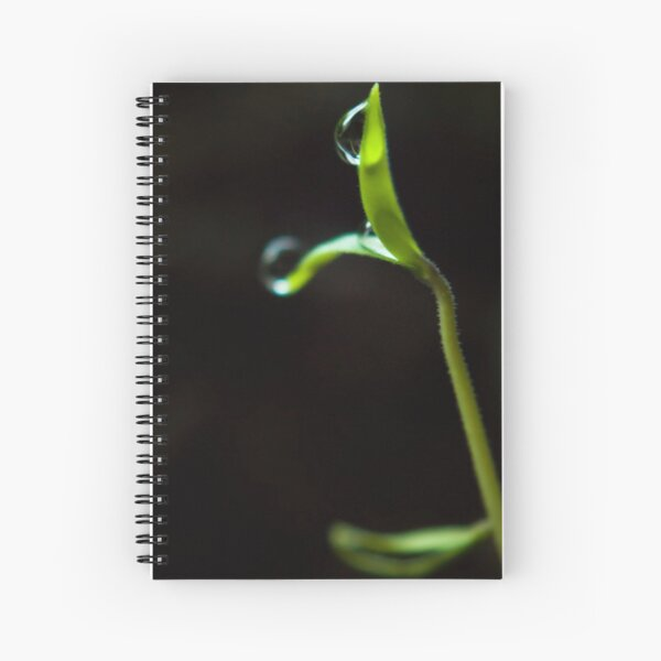 Dew Drops on Sprout Spiral Notebook