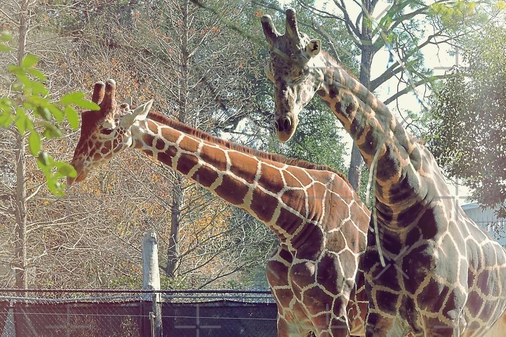Giraffe by kcrystalfriend
