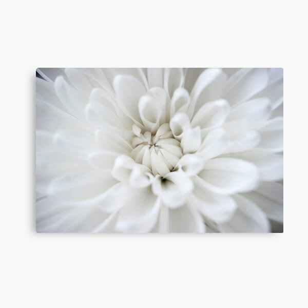 White Flower Burst Canvas Print
