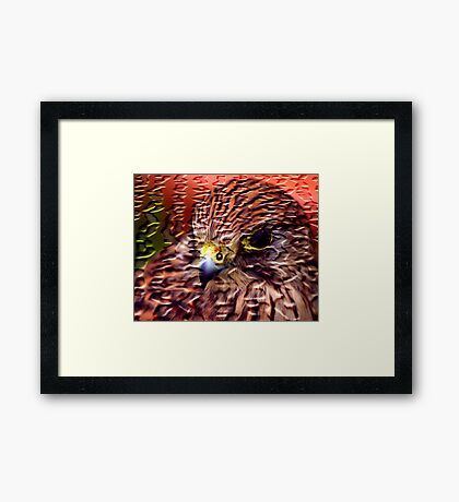 Craquelure Kestrel Framed Print