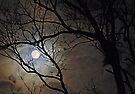 Winters Night by Dawne Olson
