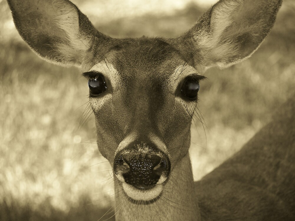 Doe Eyes by gdob27