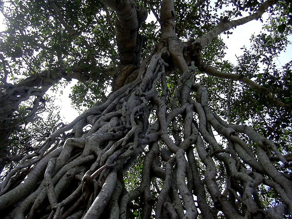 banyan root by pugazhraj