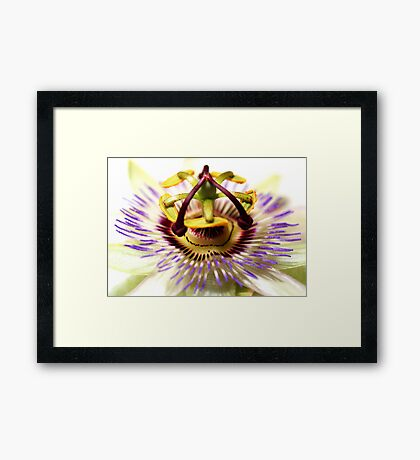 The Passion Flower Framed Print