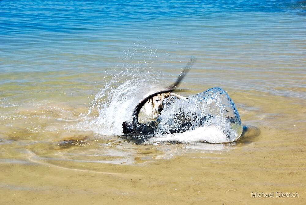 Dog and Stingray by Michael Dietrich