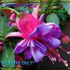 Fuchsias Only - Top Ten Banner by BlueMoonRose