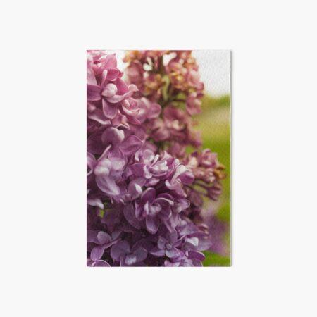Lilac Bush Art Board Print