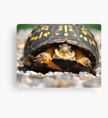 Box Turtle Canvas Print
