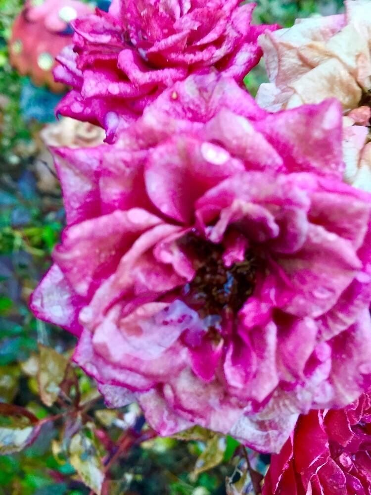 Fresh Rain On Fresh Flower by BigTSpencer