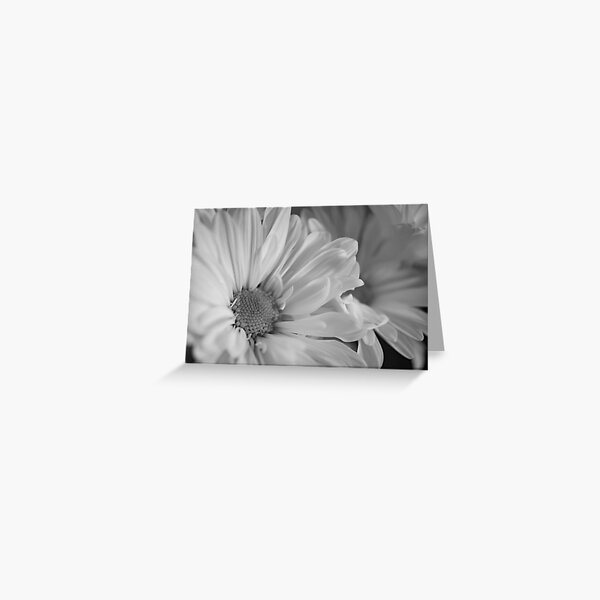 Black & White Daisies Greeting Card
