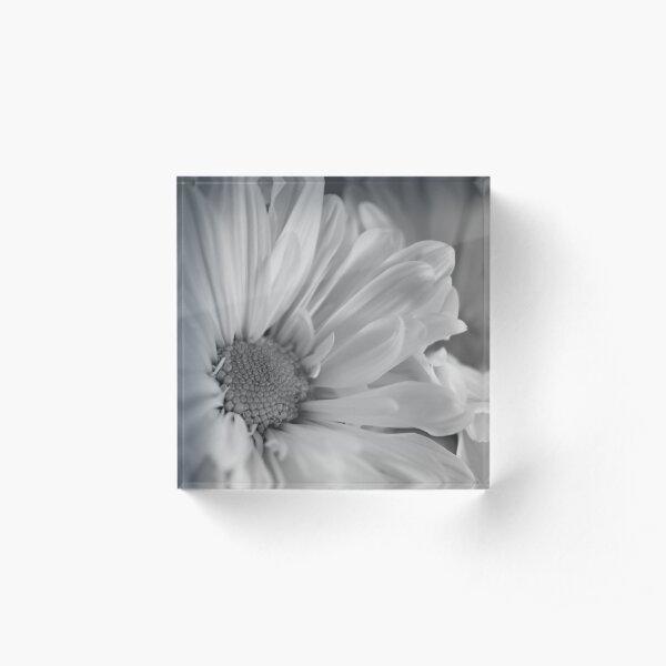 Black & White Daisies Acrylic Block
