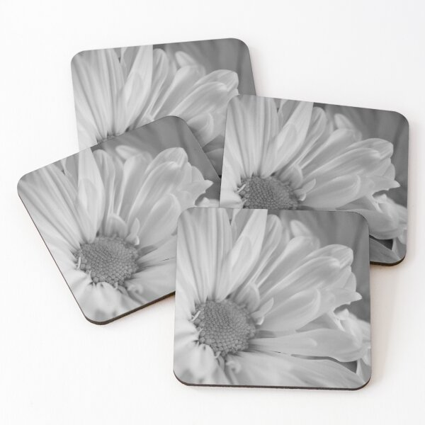 Black & White Daisies Coasters (Set of 4)