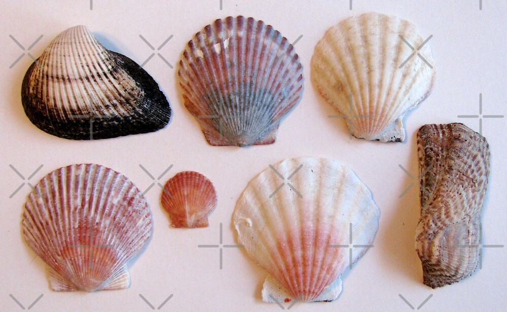 Shells 1 by collageDP