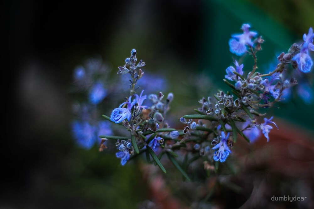 Forget me not by dumblydear