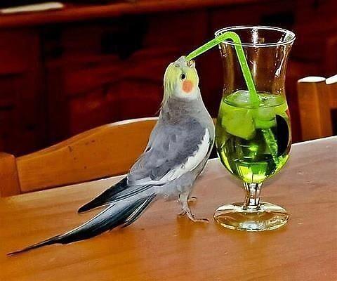 Bird Drinking Cocktail by bartzlaura