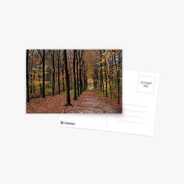 Rows Postcard