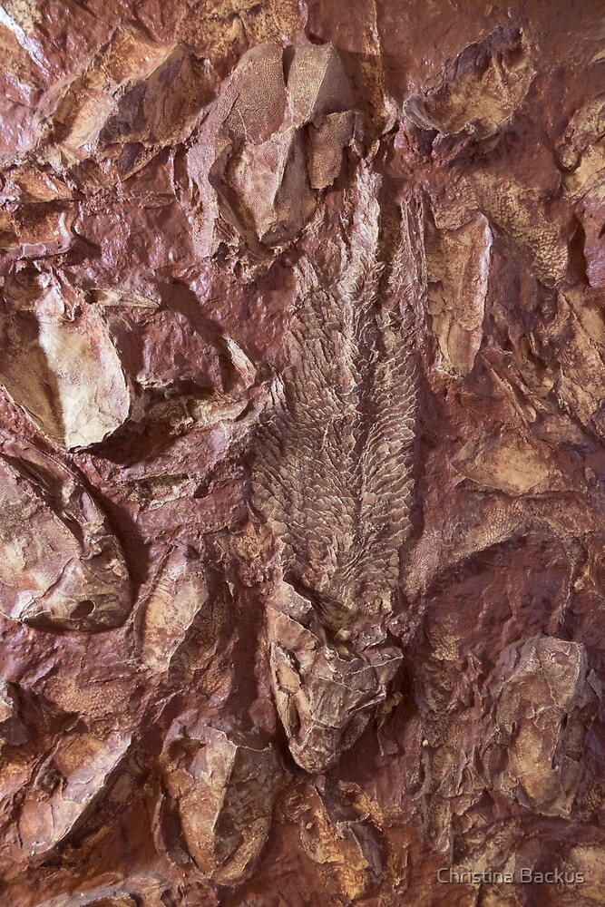 Fish Fossil by Christina Backus