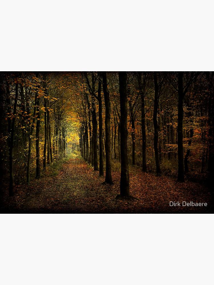 Woodland, light by Delbaere